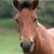 马属牲畜专区