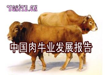 中国肉牛业发展报告
