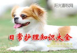 狗狗日常护理知识大全