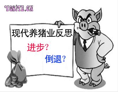 现代养猪业反思:我们在进步还是在倒退?