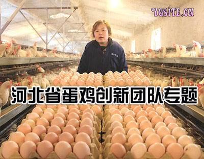河北省现代农业技术体系蛋鸡创新团队专题