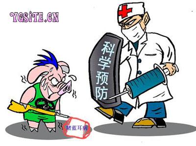 猪蓝耳病疫苗的种类与应用