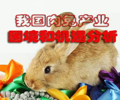 我国肉兔产业困境和机遇分析