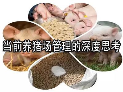 当前养猪场管理的深度思考
