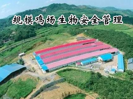 王献忠盛典:规模鸡场生物安全管理(一)