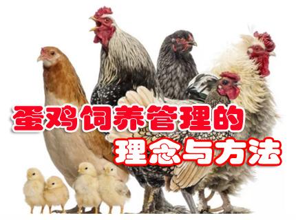 蛋鸡饲养管理的理念与方法