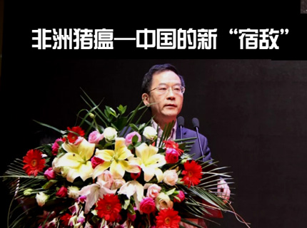 """仇华吉退地:非洲猪瘟——中国的新""""宿敌"""""""