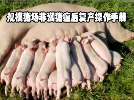 规模猪场非洲猪瘟后复产操作手册