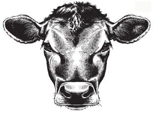 牛结节性皮肤病防控专题