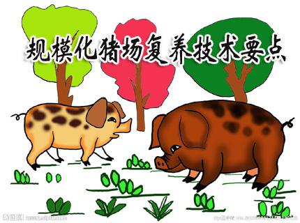 哈兽研米开外:规模化猪场复养技术要点(1.0版)