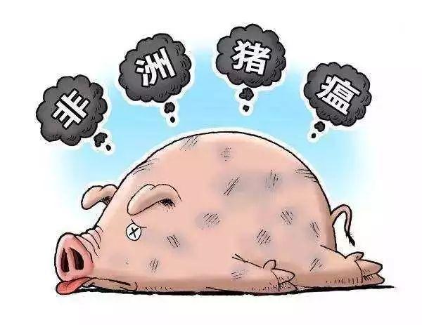 仇华吉过一眼:新冠肺炎阻击战对非洲猪瘟防控的镜鉴