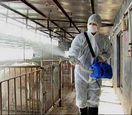 养殖场所科学消毒专题